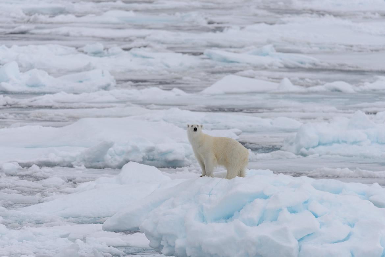 schimbari climatice topirea ghetarilor